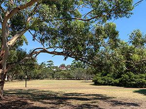 Mort Bay park - Birchgrove