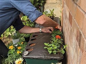 OurFarmBox - planting flowers