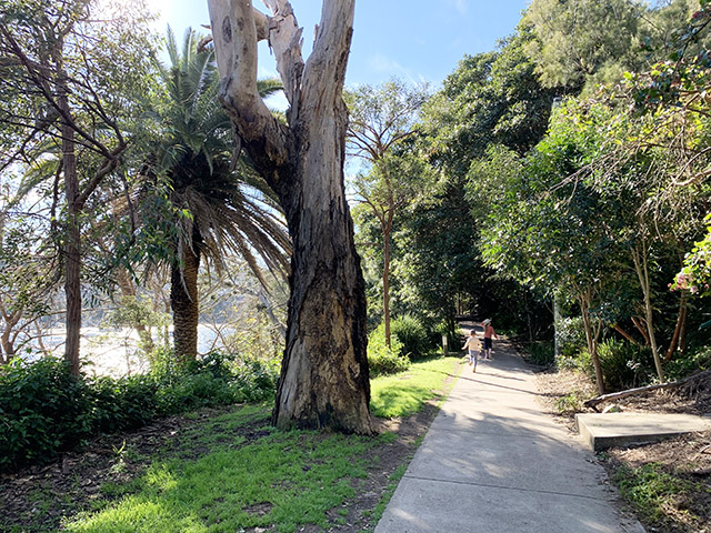 Cremorne Foreshore Walk paths