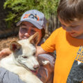 Boy patting Dingo pups at Sydney Zoo