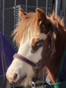 Pony Rides at Orange Grove