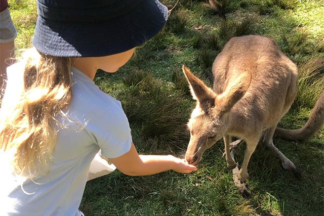 Symbio Wildlife Park-Wallaby and kangaroo feeding